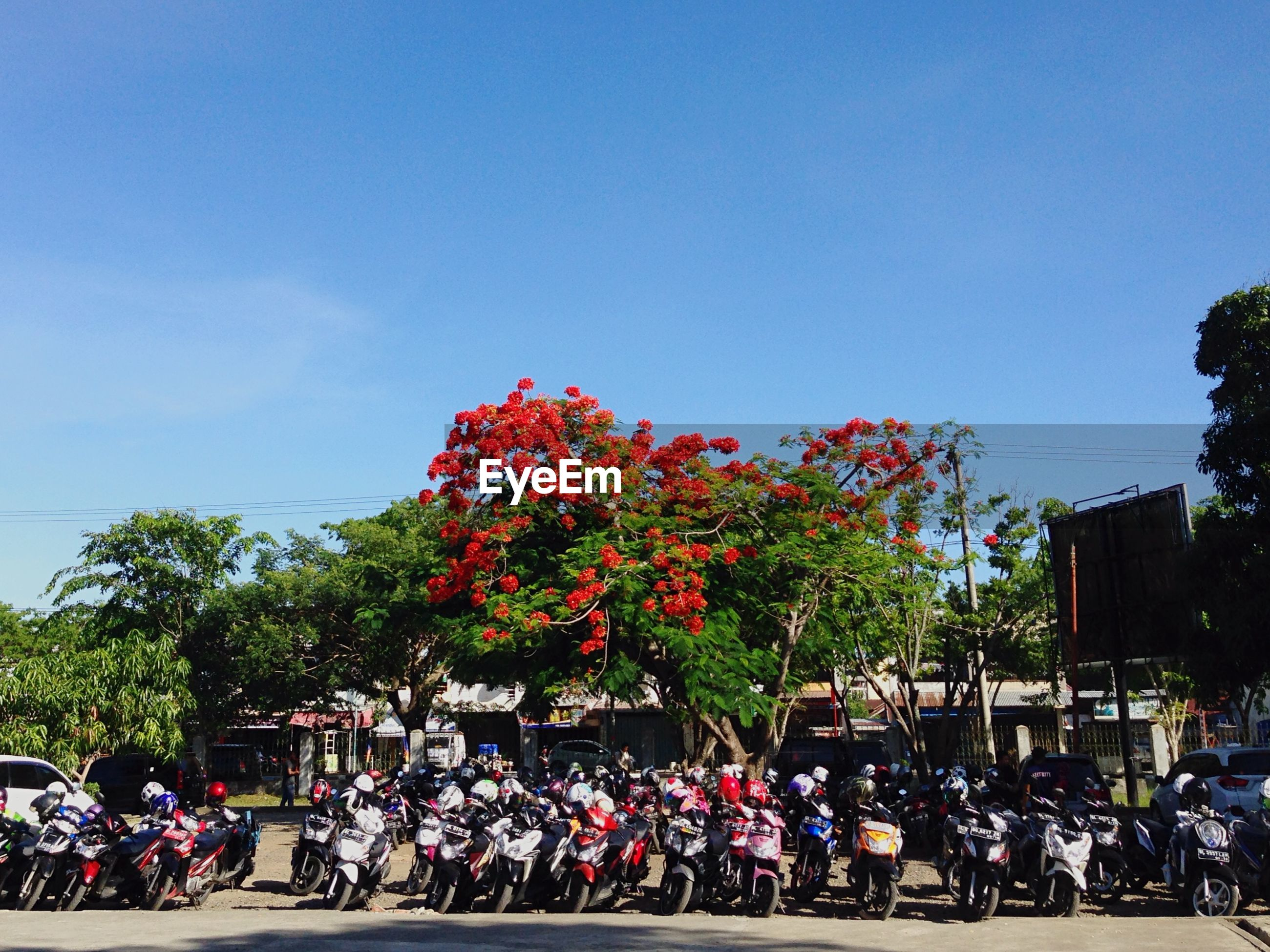 land vehicle, bicycle, tree, clear sky, transportation, mode of transport, flower, blue, copy space, sky, men, car, large group of people, parked, parking, growth, lifestyles, stationary, day