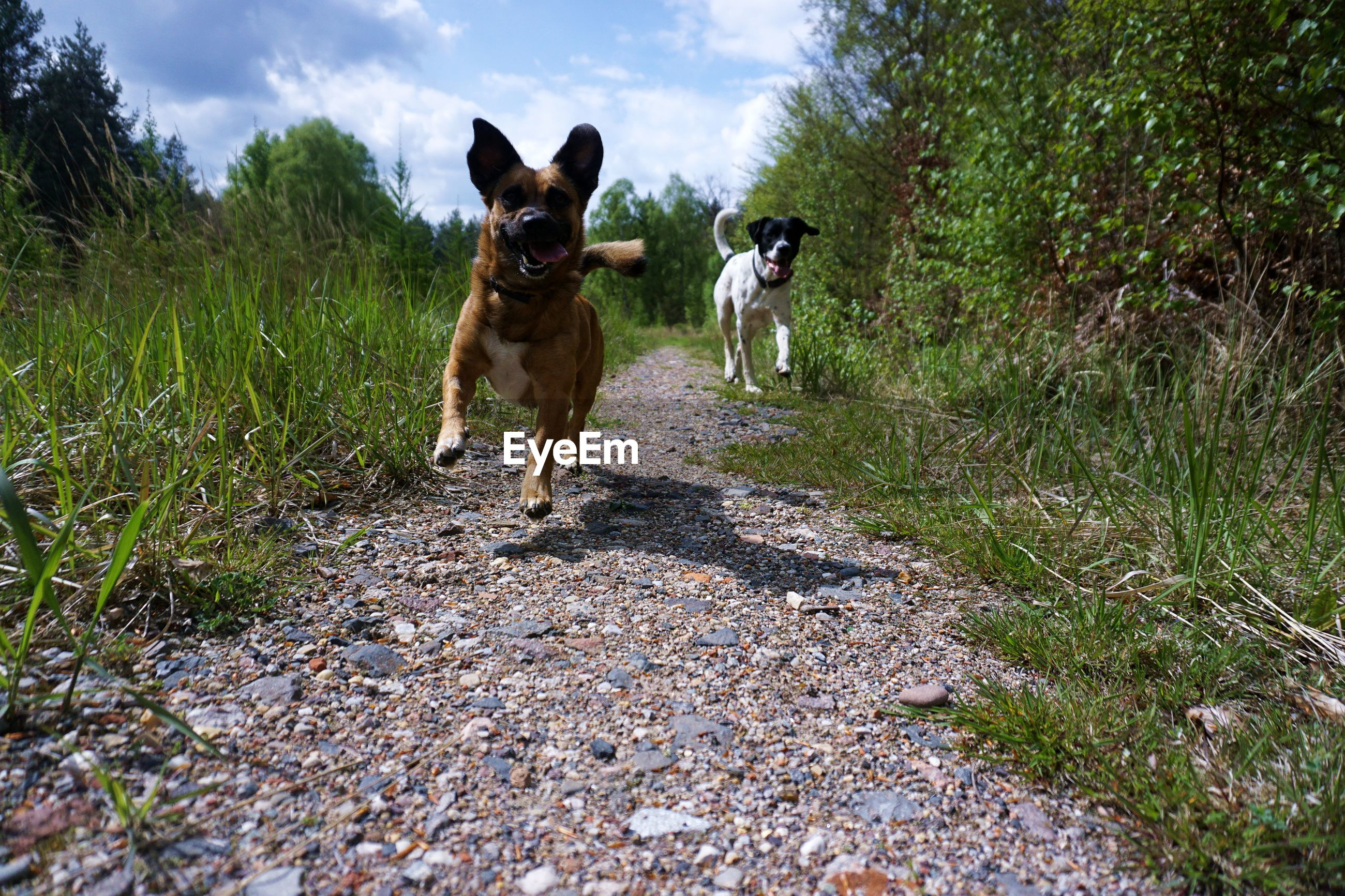 Dogs running on footpath against sky