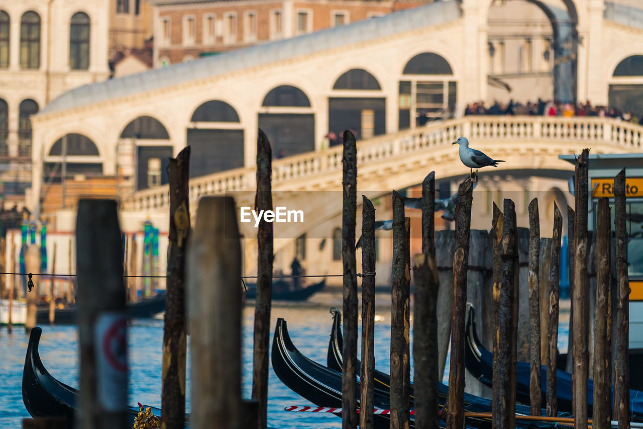 architecture, built structure, arch, building exterior, water, travel destinations, tourism, travel, nautical vessel, transportation, mode of transportation, history, day, nature, the past, city, gondola - traditional boat, incidental people, bridge - man made structure, canal, architectural column, wooden post