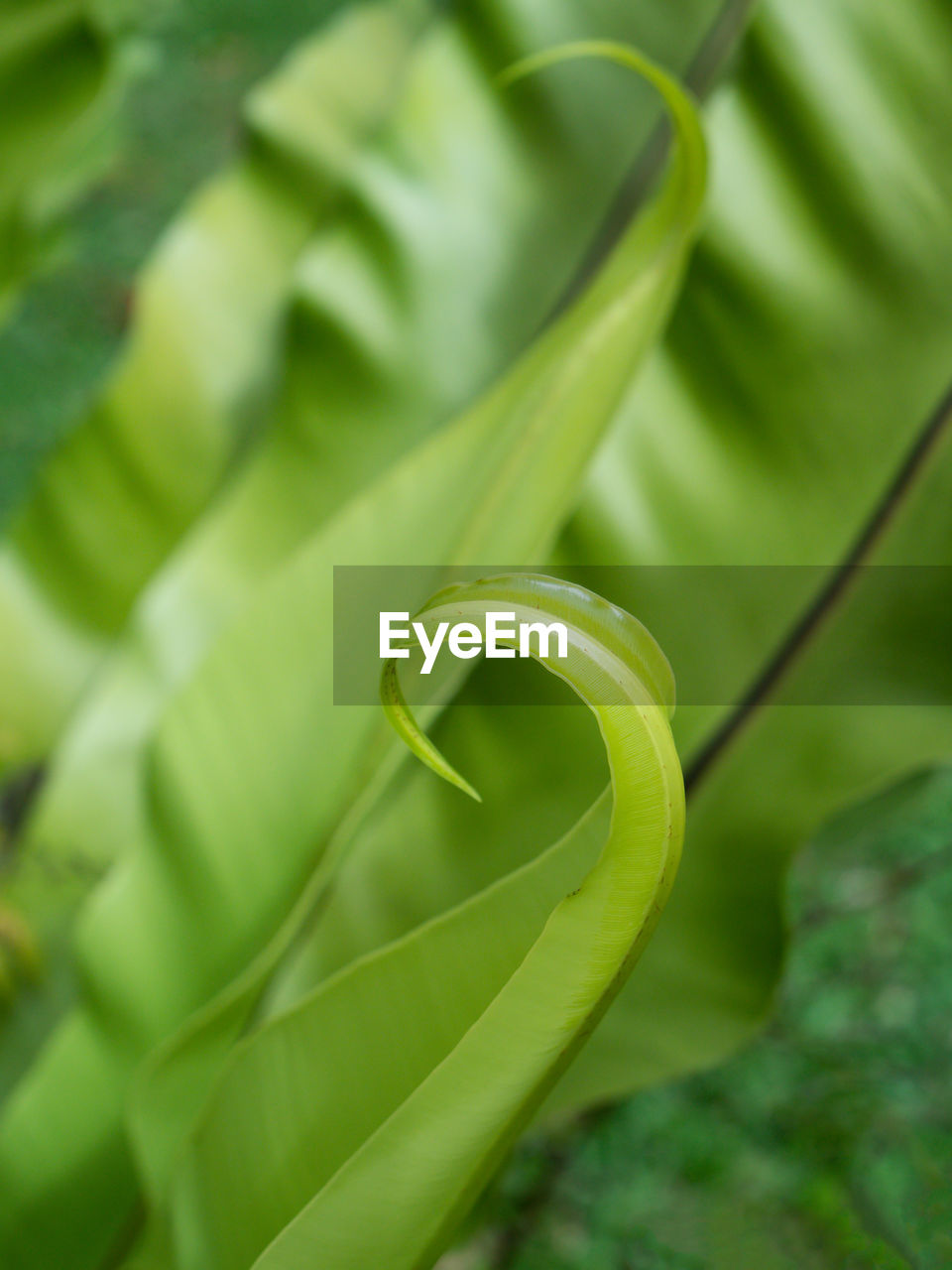 green color, plant, growth, selective focus, close-up, spiral, no people, beauty in nature, tendril, curled up, nature, plant part, day, vine, leaf, freshness, focus on foreground, outdoors, vulnerability, tranquility
