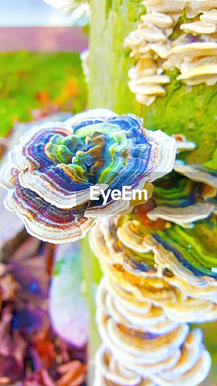 multi colored, swirl, close-up, focus on foreground, no people, spiral, outdoors, sweet food, day