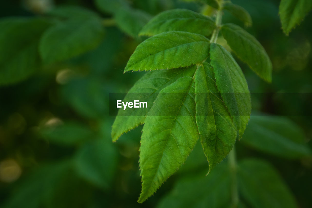 green color, leaf, plant part, plant, growth, close-up, beauty in nature, no people, nature, focus on foreground, day, freshness, outdoors, food, selective focus, food and drink, fragility, herb, vulnerability, leaf vein