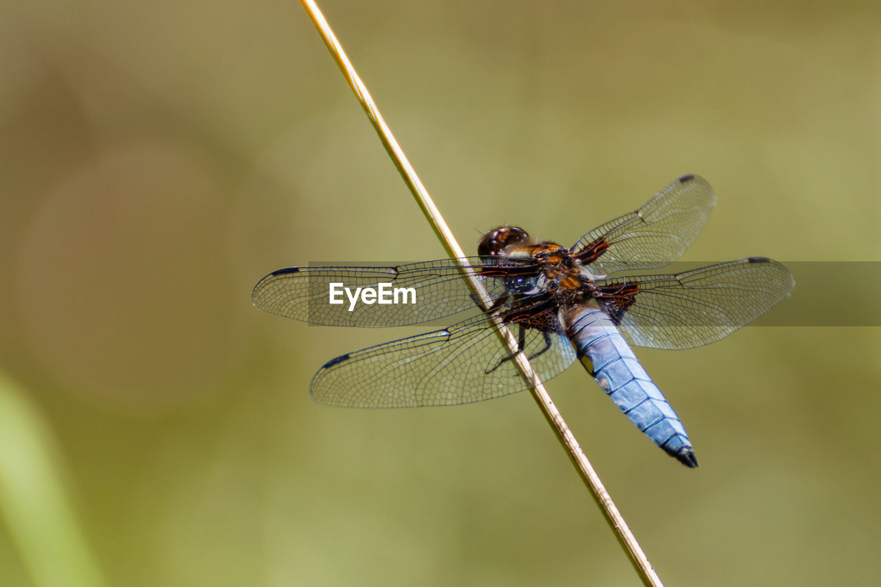 invertebrate, insect, animal wing, animals in the wild, animal wildlife, animal, animal themes, close-up, dragonfly, one animal, nature, focus on foreground, day, no people, plant, twig, zoology, selective focus, outdoors, green color, animal eye