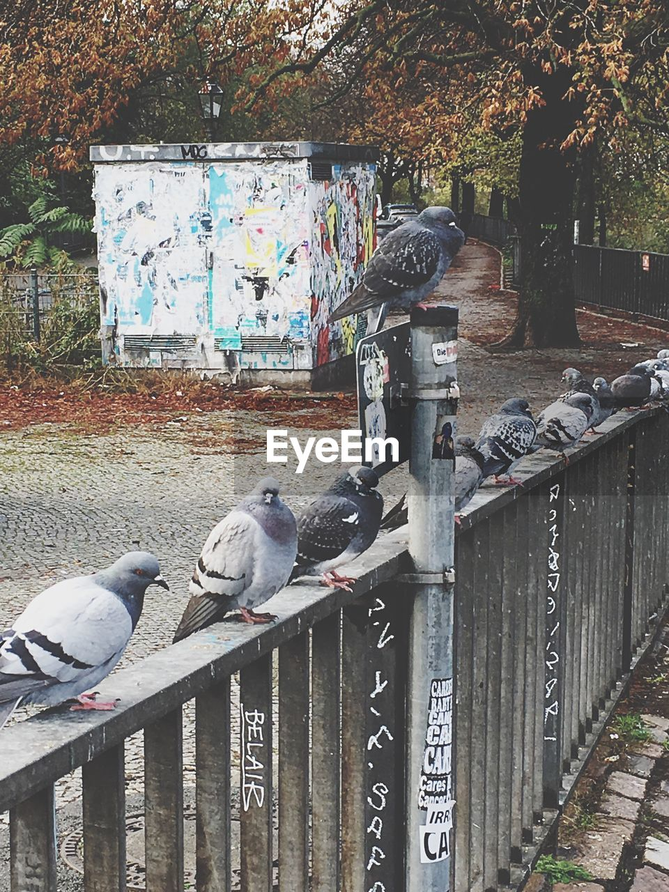 outdoors, day, railing, animal themes, no people, tree, animals in the wild, bird, retaining wall, architecture, nature