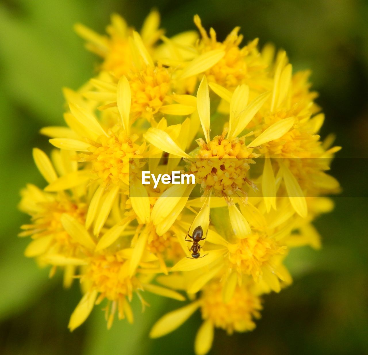 flower, insect, petal, yellow, fragility, nature, animal themes, one animal, bee, beauty in nature, animals in the wild, flower head, growth, freshness, plant, pollination, close-up, no people, day, outdoors, buzzing, blooming