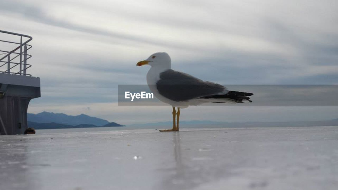 one animal, animals in the wild, bird, seagull, animal themes, sea, day, nature, beach, outdoors, water, no people, perching, sky