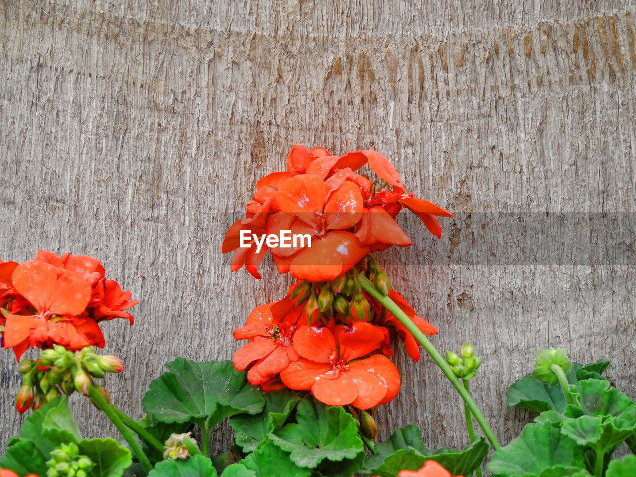 flower, growth, beauty in nature, fragility, petal, freshness, orange color, plant, nature, flower head, blooming, no people, red, outdoors, leaf, day, close-up