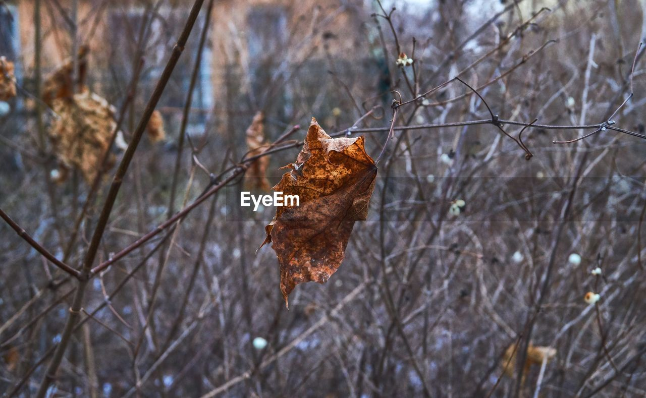tree, branch, plant, bare tree, nature, autumn, focus on foreground, dry, day, no people, leaf, plant part, change, brown, outdoors, tranquility, winter, cold temperature, land, dead plant, leaves, dried