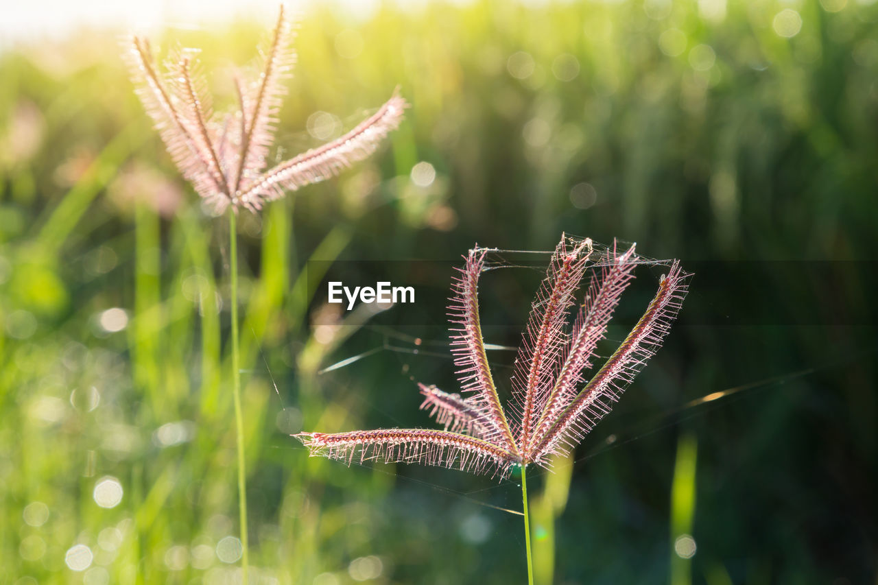 plant, focus on foreground, growth, nature, beauty in nature, no people, close-up, green color, day, fragility, vulnerability, flower, tranquility, outdoors, freshness, selective focus, grass, sunlight, field, flowering plant