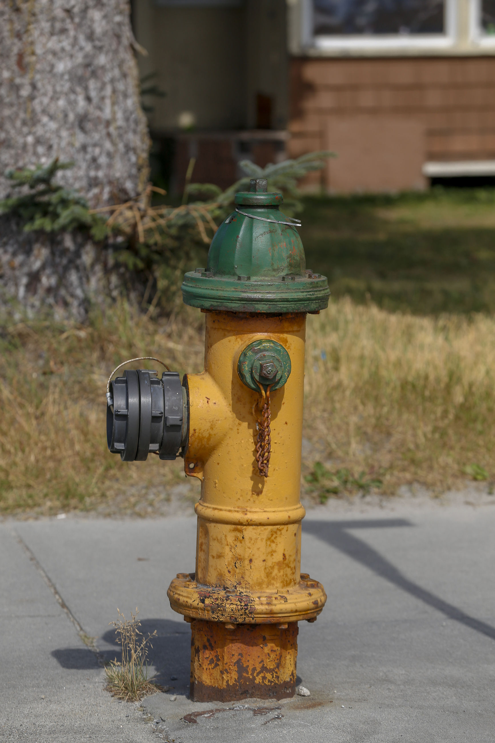 View of fire hydrant on street