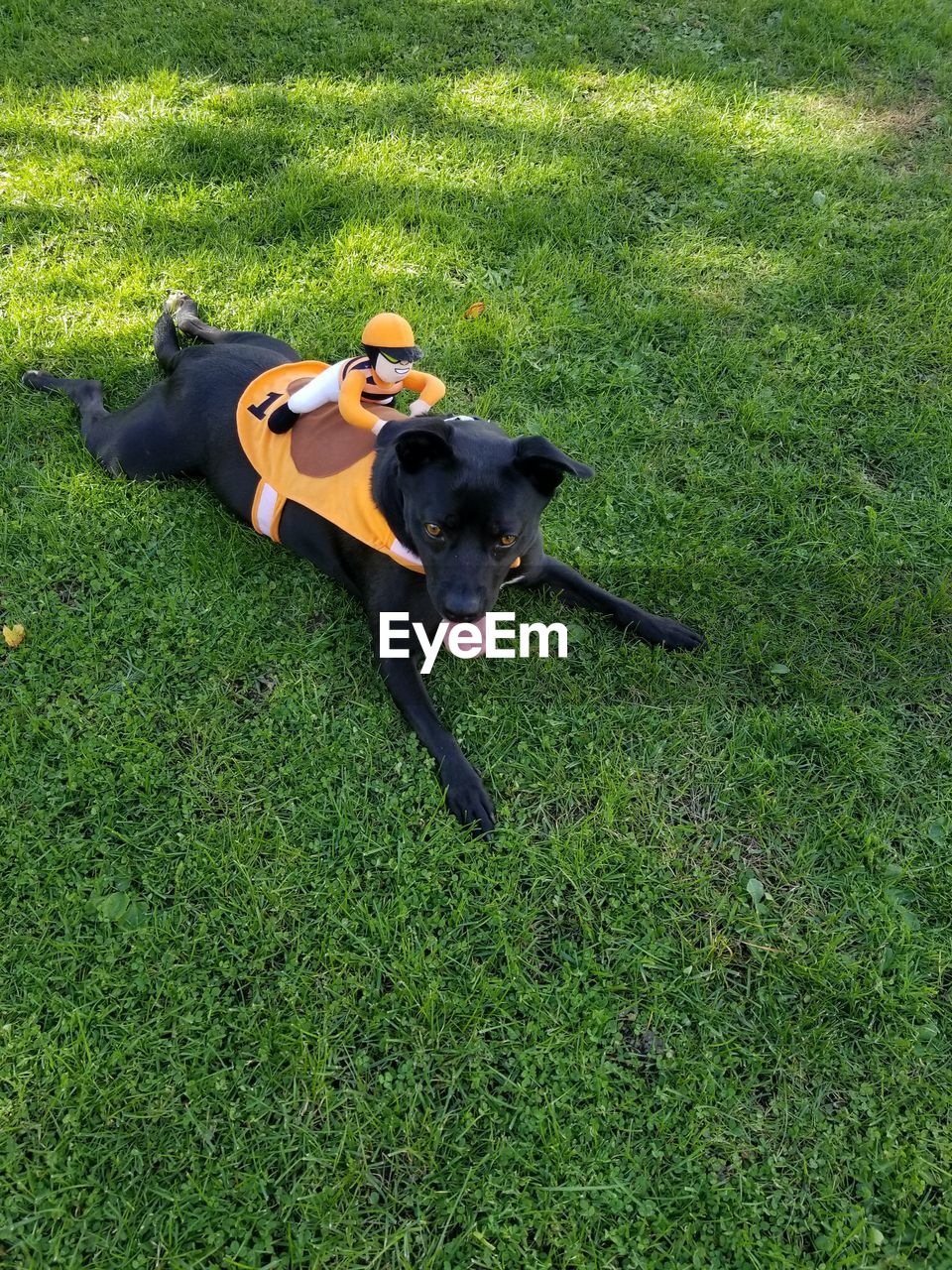 High angle view of stuffed toy on dog relaxing at grassy field