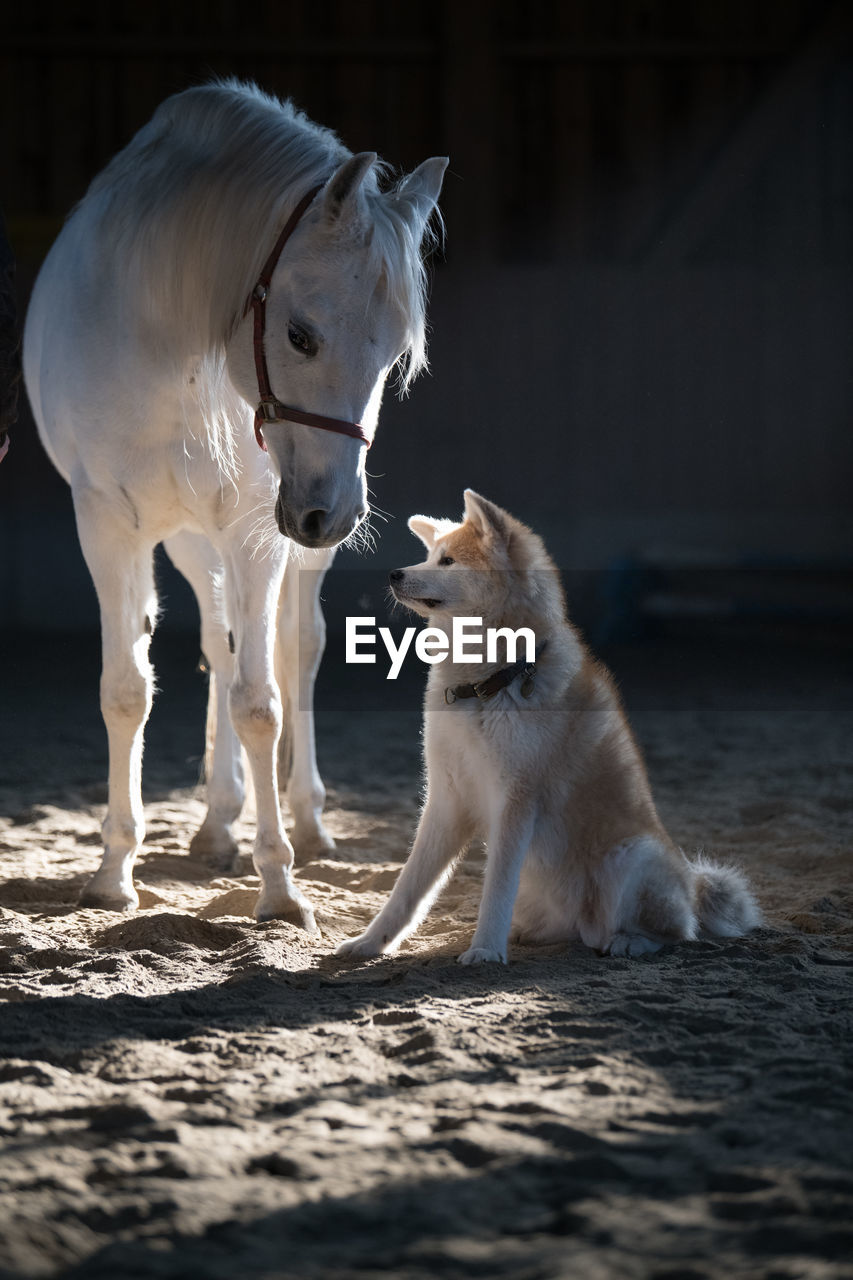 Horse Standing By Dog At Farm
