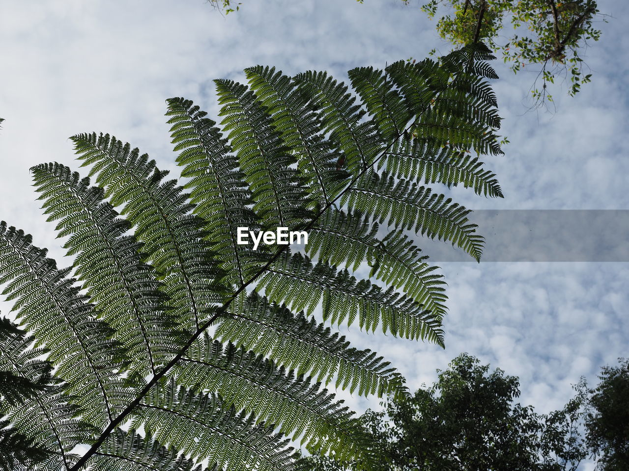 plant, tree, growth, leaf, plant part, beauty in nature, green color, nature, no people, day, sky, low angle view, outdoors, close-up, fern, tranquility, branch, leaves, focus on foreground, botany, palm leaf