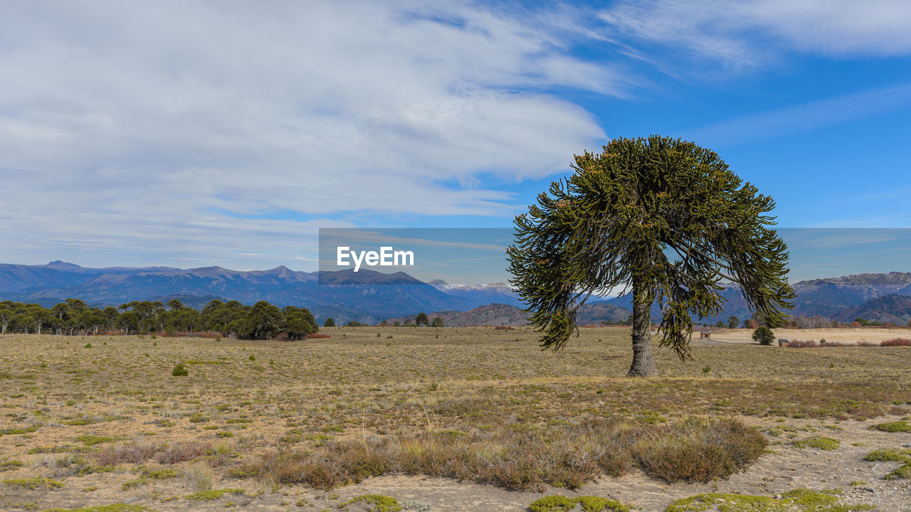 landscape, sky, environment, plant, tree, tranquil scene, scenics - nature, beauty in nature, tranquility, land, field, non-urban scene, cloud - sky, mountain, nature, no people, growth, remote, day, idyllic, outdoors, arid climate, semi-arid