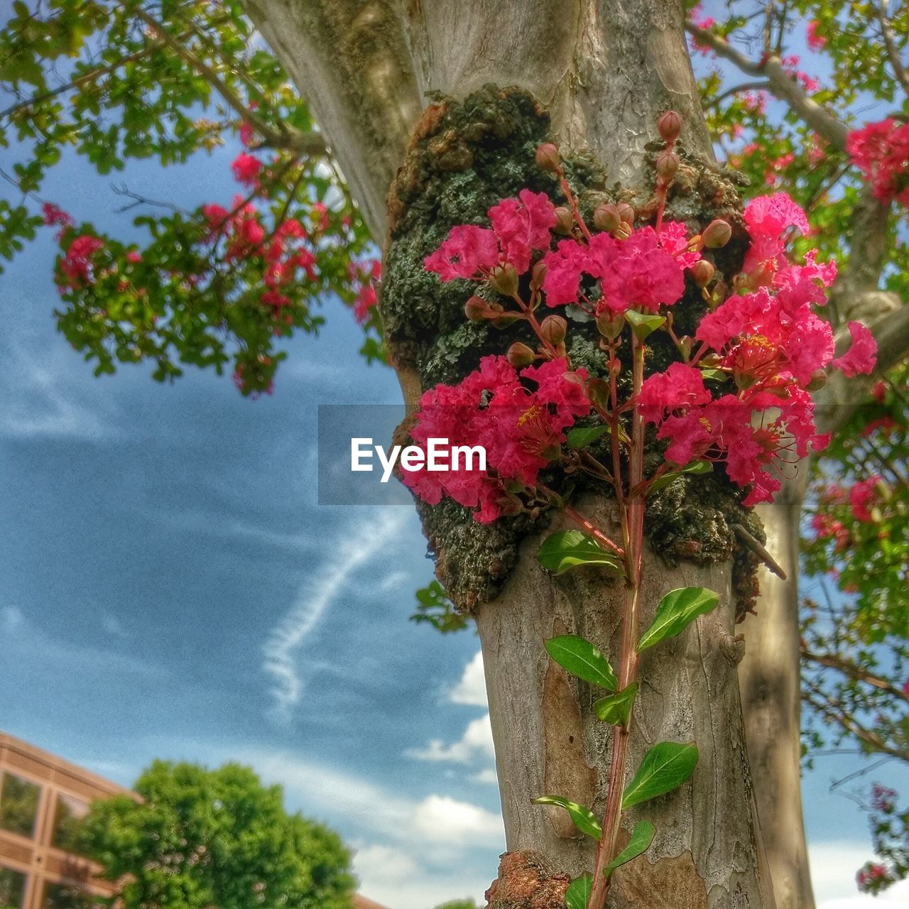 flower, tree, growth, nature, beauty in nature, plant, fragility, tree trunk, day, no people, outdoors, leaf, branch, freshness, blooming, focus on foreground, low angle view, close-up, sky, architecture, flower head