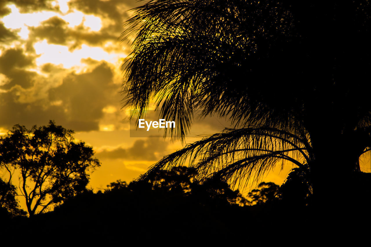 silhouette, sky, sunset, plant, tree, beauty in nature, cloud - sky, tranquility, tranquil scene, scenics - nature, growth, nature, no people, low angle view, orange color, outdoors, idyllic, branch, non-urban scene, dramatic sky