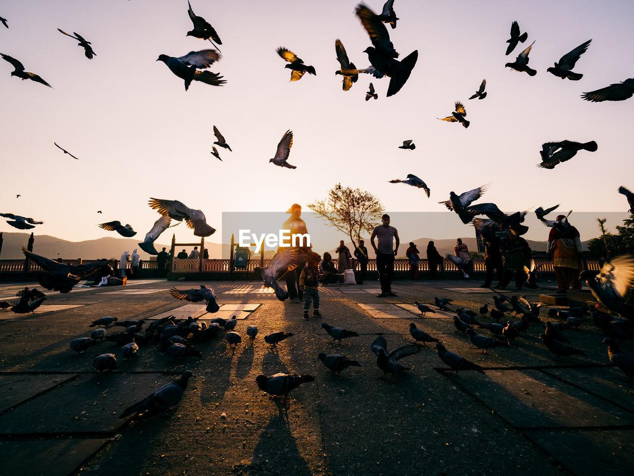 vertebrate, bird, animal, animal themes, animals in the wild, large group of animals, group of animals, flying, animal wildlife, sky, flock of birds, nature, sunset, pigeon, real people, mid-air, architecture, spread wings, street, motion