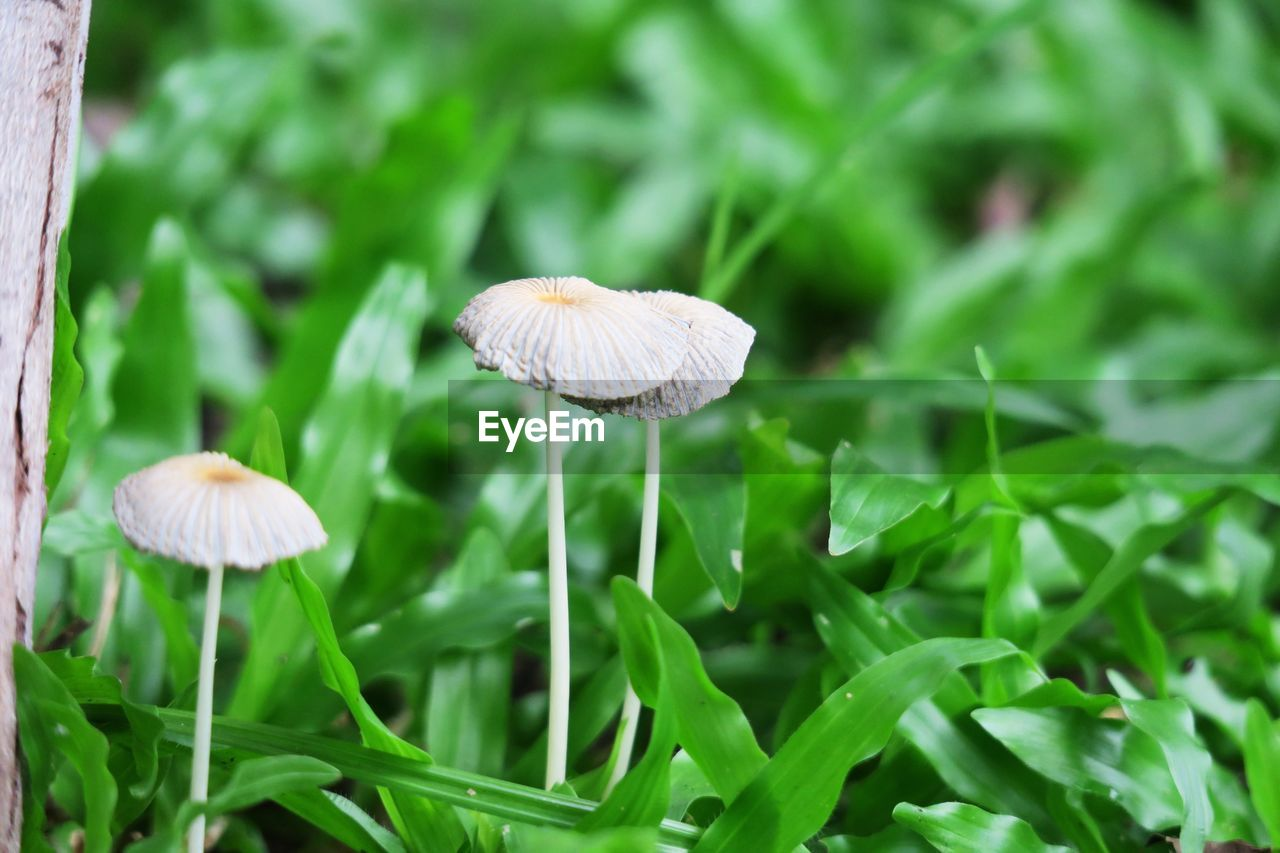 mushroom, growth, plant, fungus, vegetable, beauty in nature, food, close-up, land, freshness, nature, green color, vulnerability, fragility, toadstool, focus on foreground, no people, field, day, selective focus, outdoors