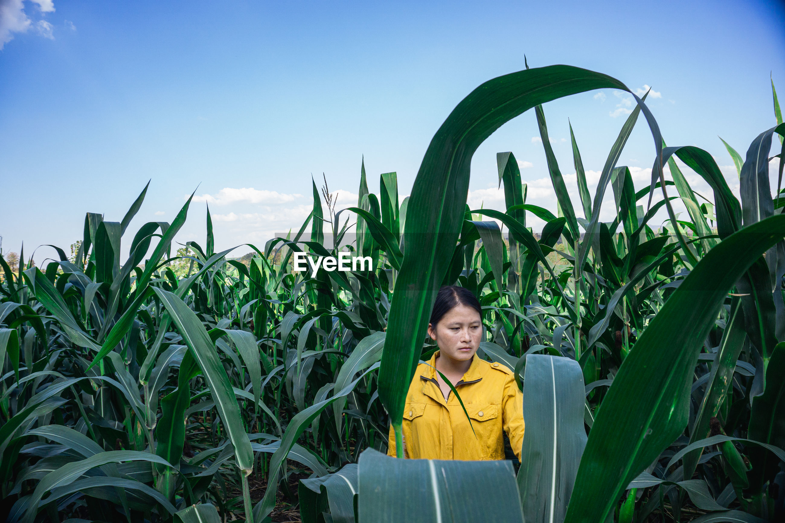 Woman looking away by plants growing in farm