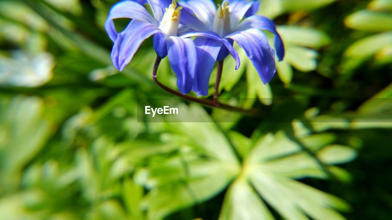 flower, growth, beauty in nature, nature, petal, fragility, freshness, plant, green color, no people, flower head, day, outdoors, close-up, leaf, blooming