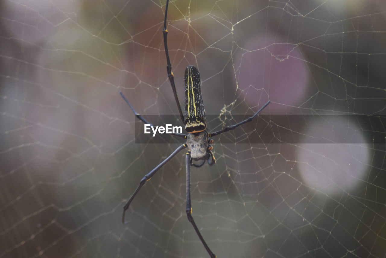 Close-Up Of Spider And Web