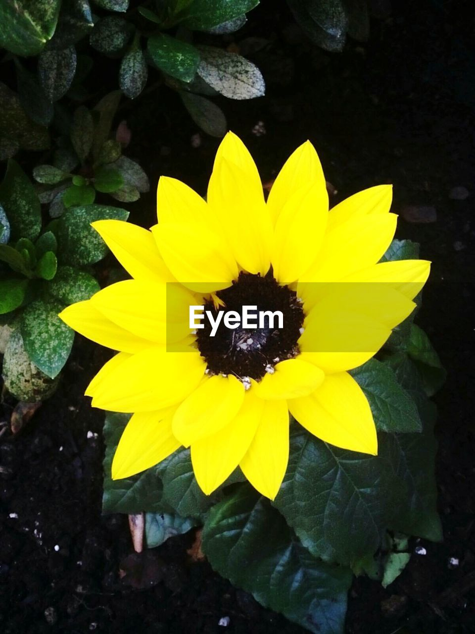 flower, yellow, petal, fragility, growth, flower head, nature, beauty in nature, freshness, plant, outdoors, day, no people, blooming, one animal, close-up, animal themes