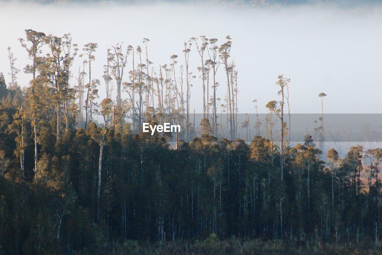 PLANTS GROWING ON FIELD