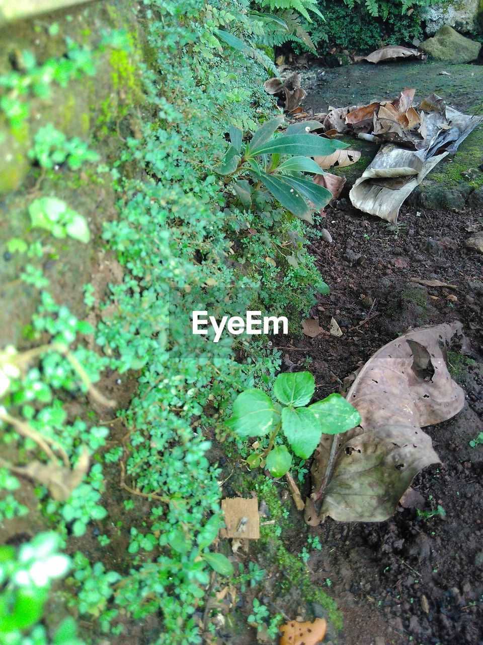 growth, high angle view, nature, plant, leaf, no people, vegetable, day, outdoors, food, freshness, close-up