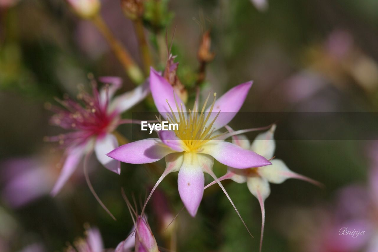 flower, nature, petal, fragility, growth, beauty in nature, plant, no people, outdoors, day, close-up, freshness, blooming, flower head