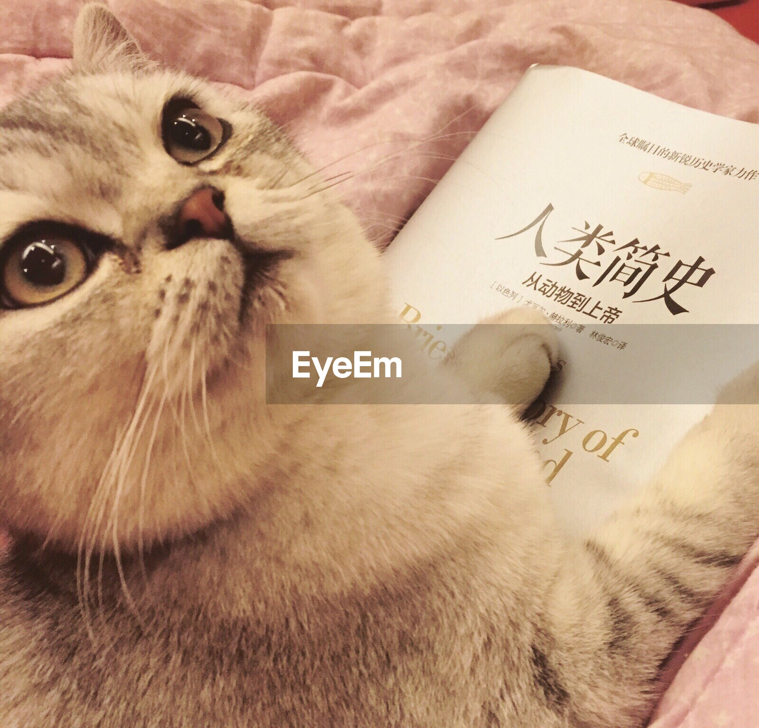 domestic cat, cat, indoors, domestic animals, pets, animal themes, mammal, text, one animal, close-up, feline, communication, whisker, western script, no people, relaxation, part of, book, animal head, high angle view