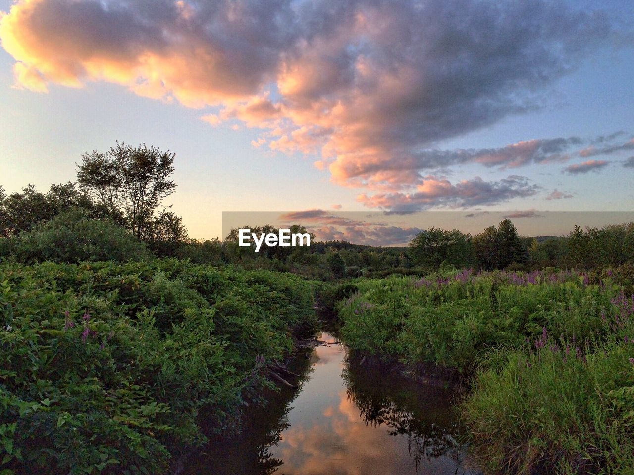 Stream amidst plants against sky during sunset