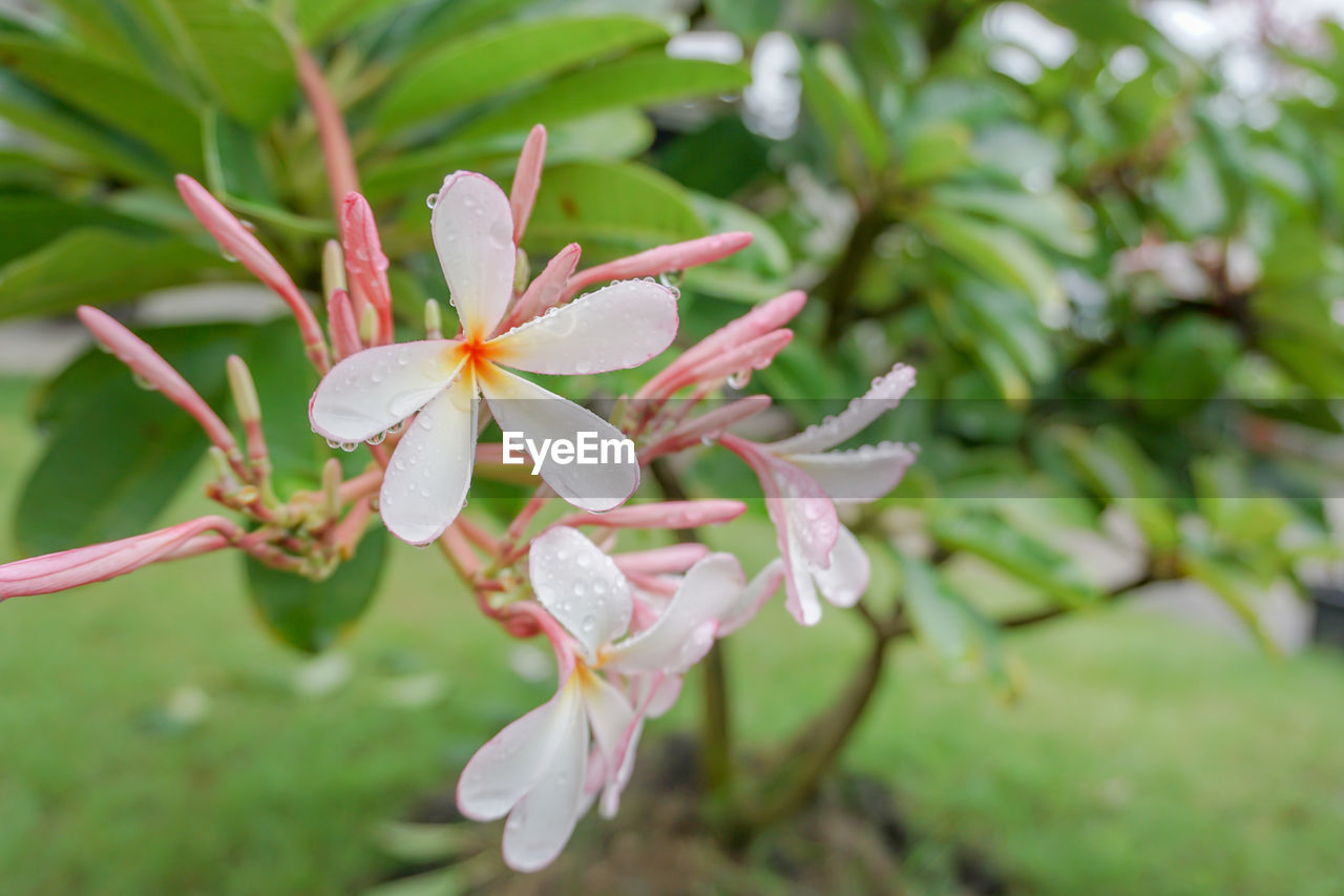 plant, growth, beauty in nature, flower, close-up, flowering plant, fragility, vulnerability, petal, freshness, day, focus on foreground, no people, inflorescence, flower head, nature, plant part, leaf, selective focus, outdoors, pollen