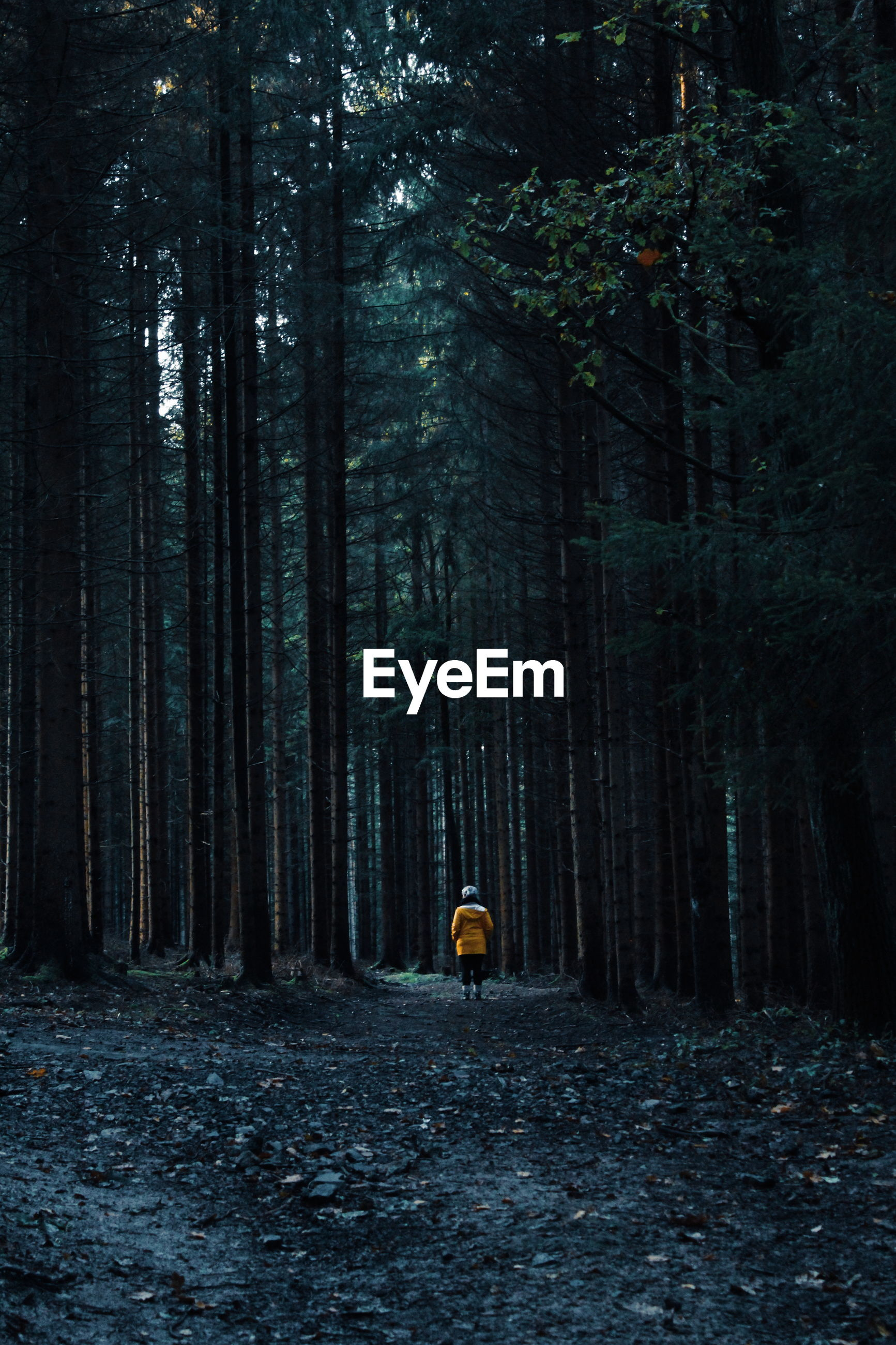 Person amidst trees in forest