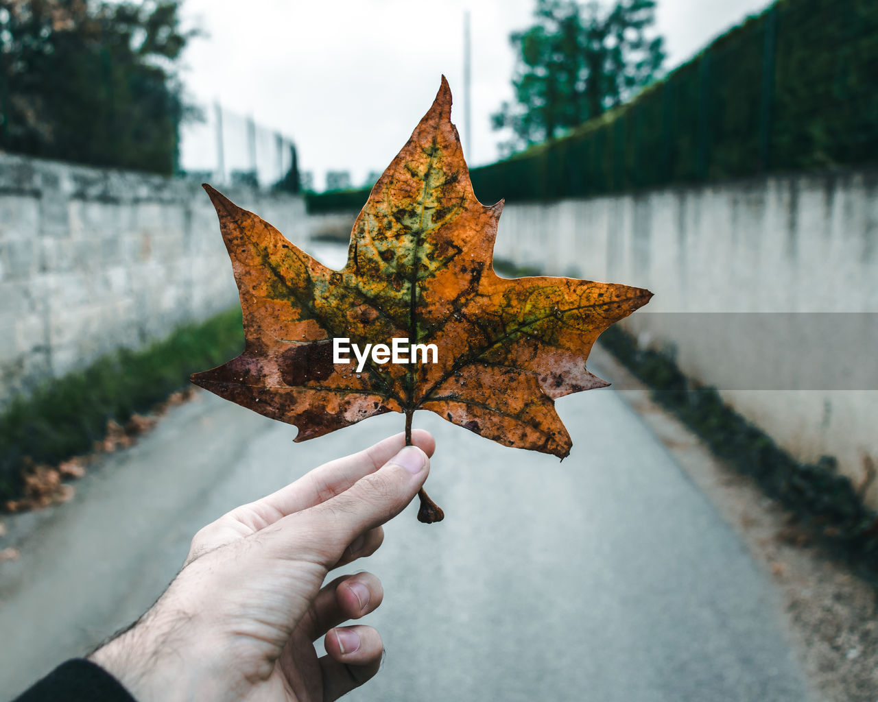 Cropped Hand Of Man Holding Maple Leaf Over Street