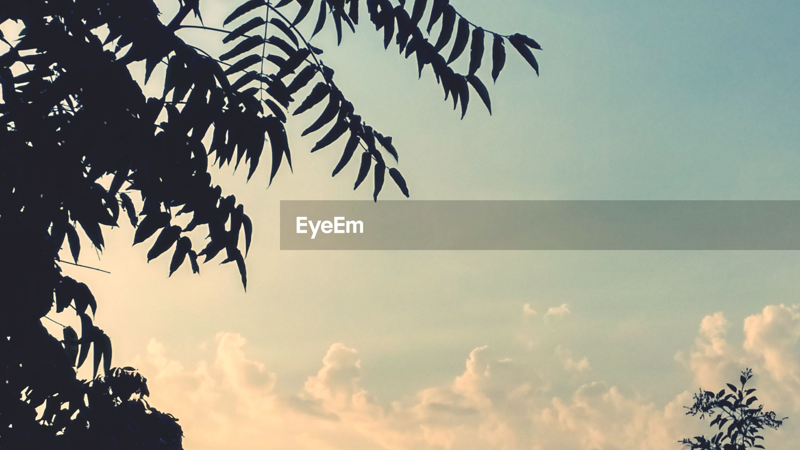 low angle view, sky, tree, cloud - sky, nature, silhouette, beauty in nature, growth, tranquility, cloud, branch, palm tree, cloudy, high section, scenics, sunset, outdoors, leaf, no people, day