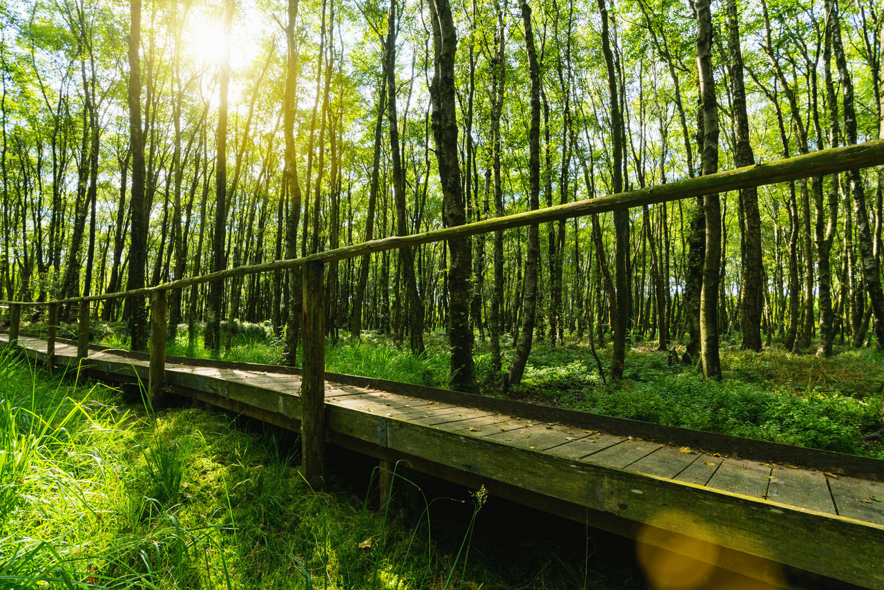 plant, land, tree, forest, nature, green color, tranquility, sunlight, beauty in nature, day, tranquil scene, no people, growth, grass, non-urban scene, outdoors, railing, connection, woodland, scenics - nature, bamboo - plant