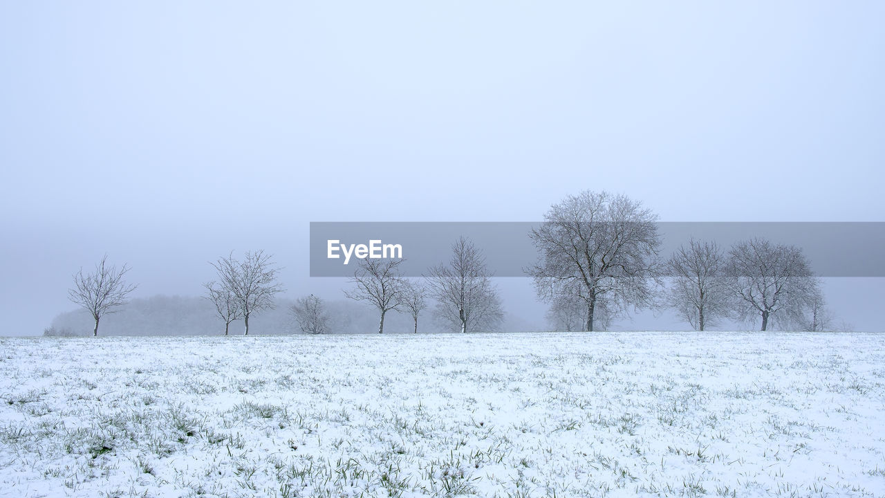 snow, cold temperature, winter, beauty in nature, plant, tree, tranquility, field, sky, tranquil scene, scenics - nature, land, white color, nature, landscape, environment, clear sky, covering, no people, blizzard, snowing