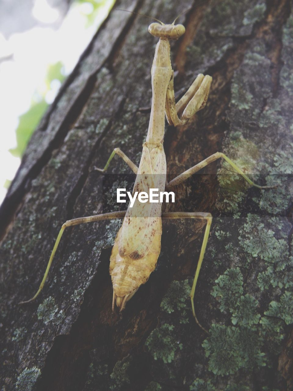 CLOSE-UP OF INSECTS ON TREE TRUNK