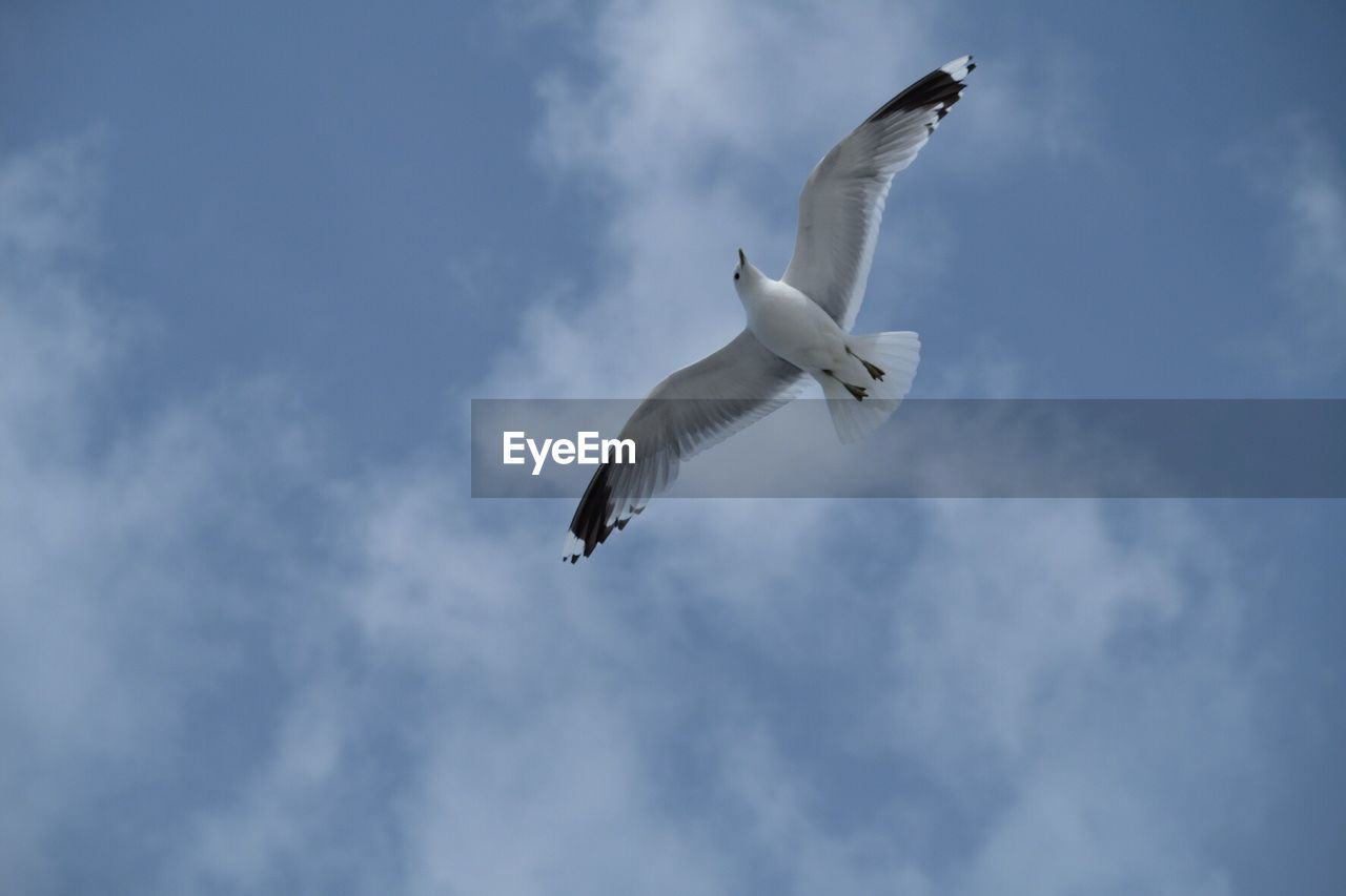 spread wings, flying, bird, animal themes, animals in the wild, cloud - sky, low angle view, sky, one animal, animal wildlife, black-headed gull, mid-air, day, nature, seagull, outdoors, no people, great egret, beauty in nature