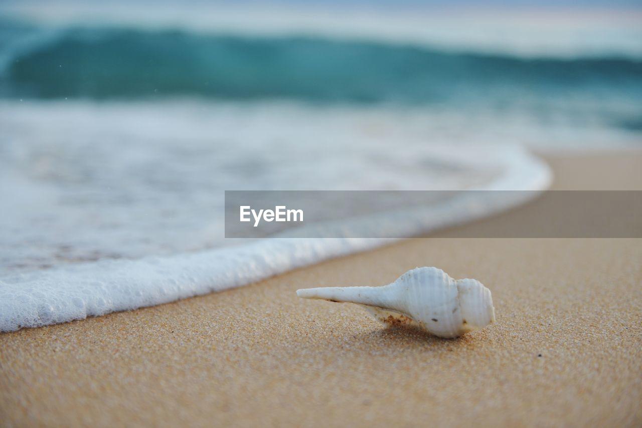 Close-up of seashell on shore at beach