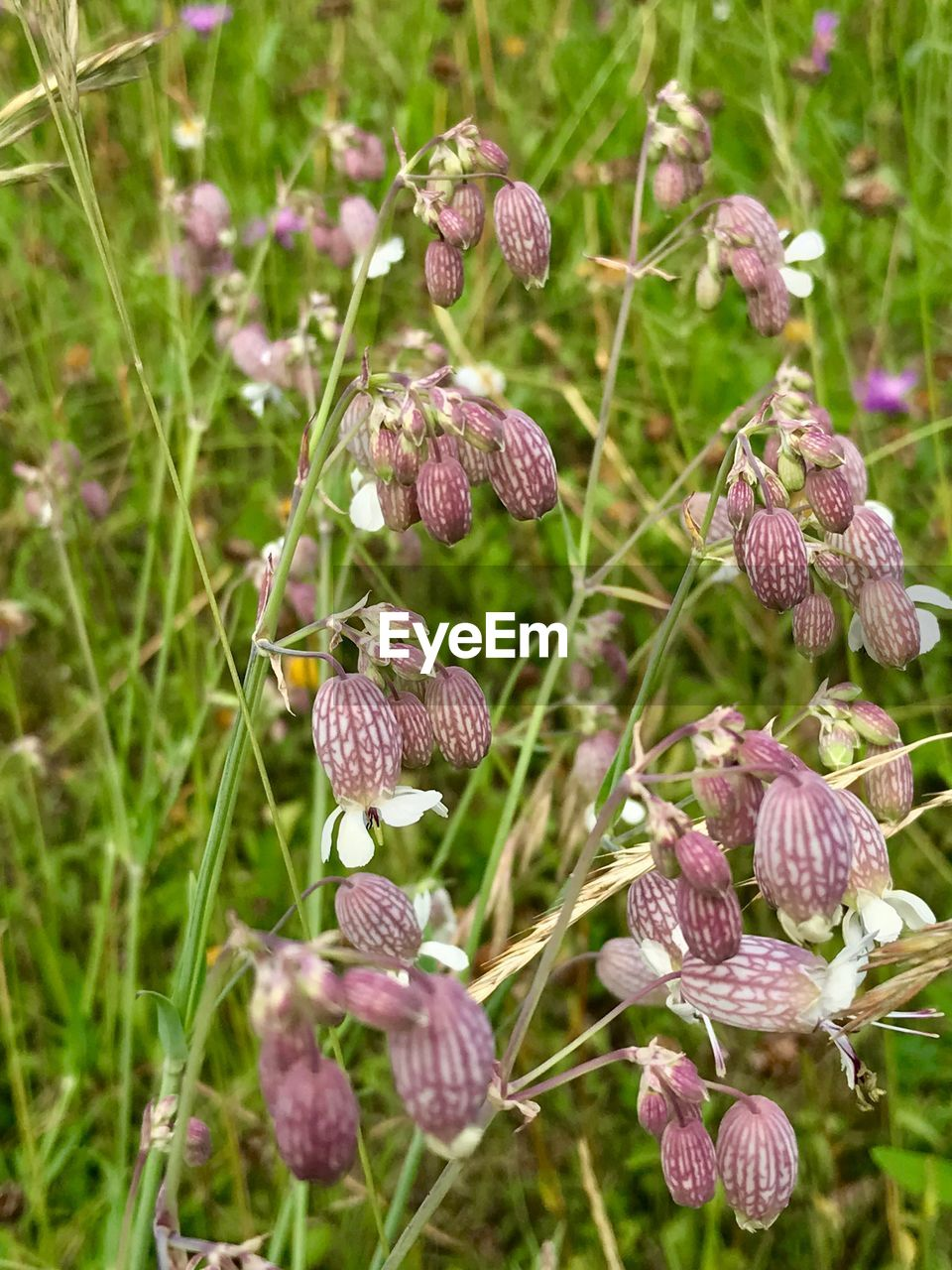 plant, growth, flower, beauty in nature, flowering plant, vulnerability, fragility, close-up, nature, freshness, day, focus on foreground, no people, land, field, outdoors, petal, flower head, plant stem, tranquility, purple