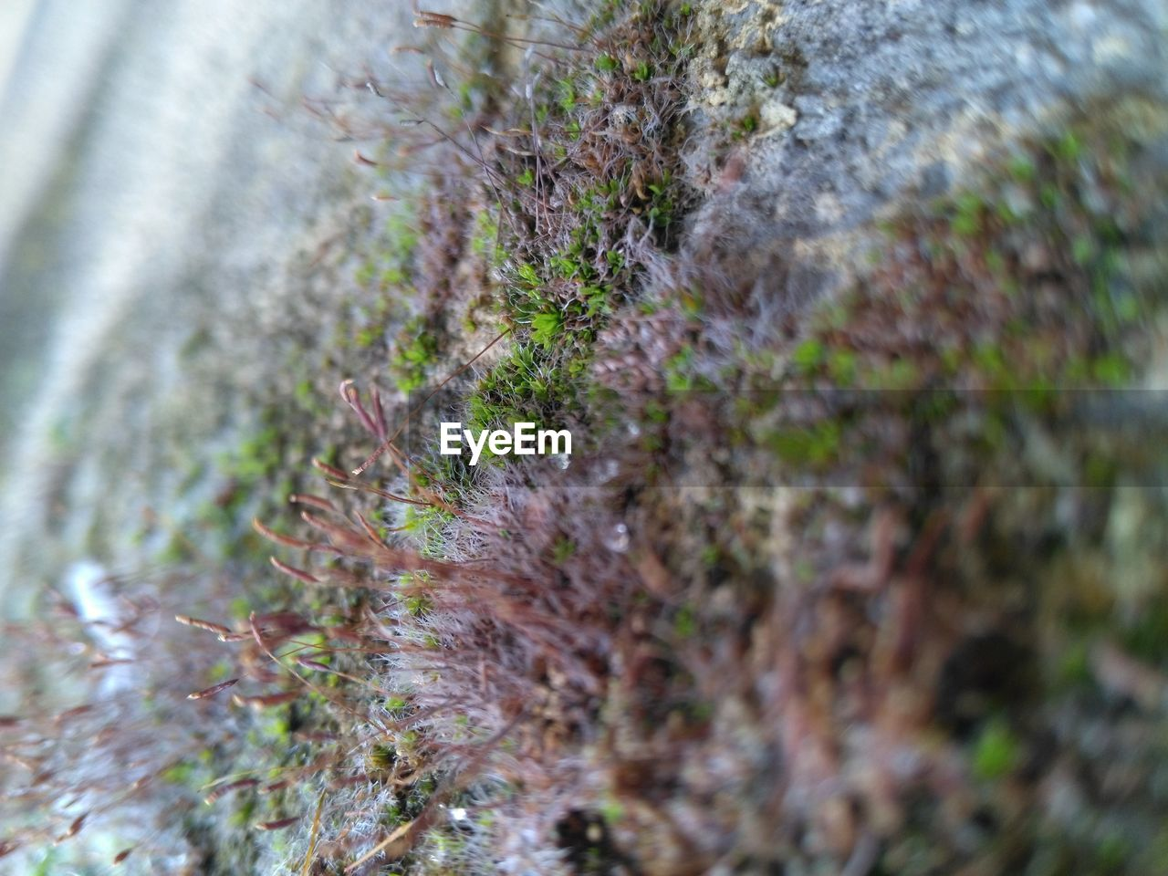 selective focus, nature, growth, no people, outdoors, day, plant, moss, water, close-up, grass, beauty in nature, freshness