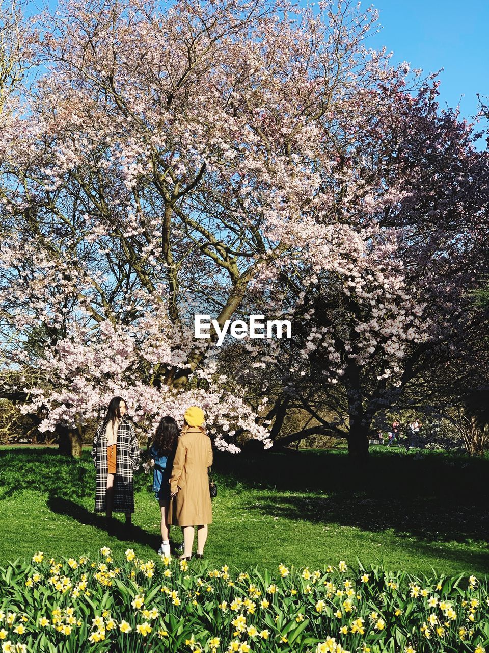 plant, flower, growth, tree, flowering plant, nature, beauty in nature, fragility, freshness, springtime, day, blossom, real people, grass, standing, one person, field, cherry blossom, vulnerability, rear view, outdoors, cherry tree