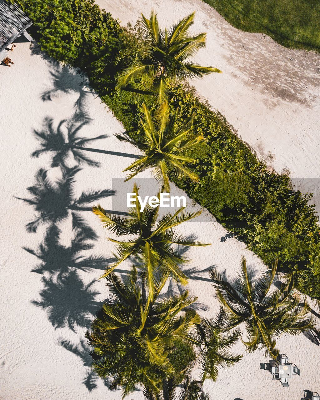 High angle view of palm trees at beach