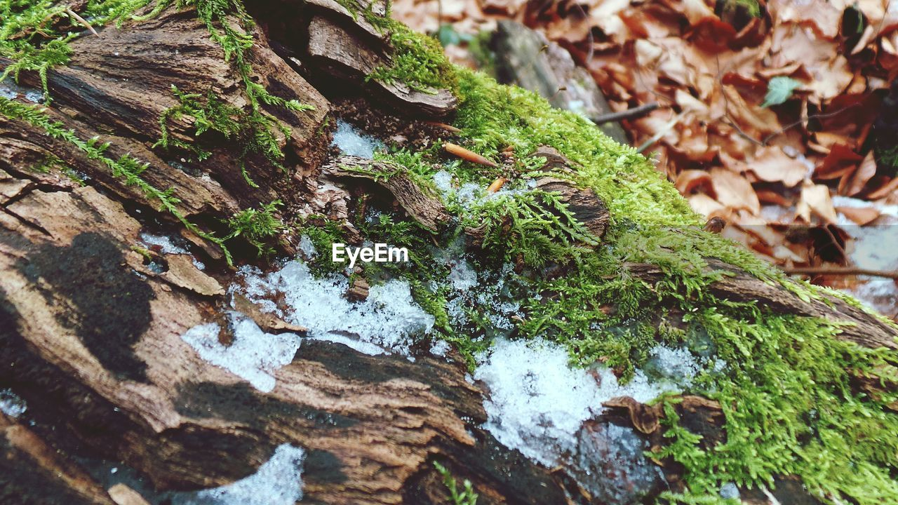 nature, moss, growth, outdoors, no people, day, close-up, tree trunk, leaf, beauty in nature, green color, fungus, tree, toadstool, fragility, fly agaric