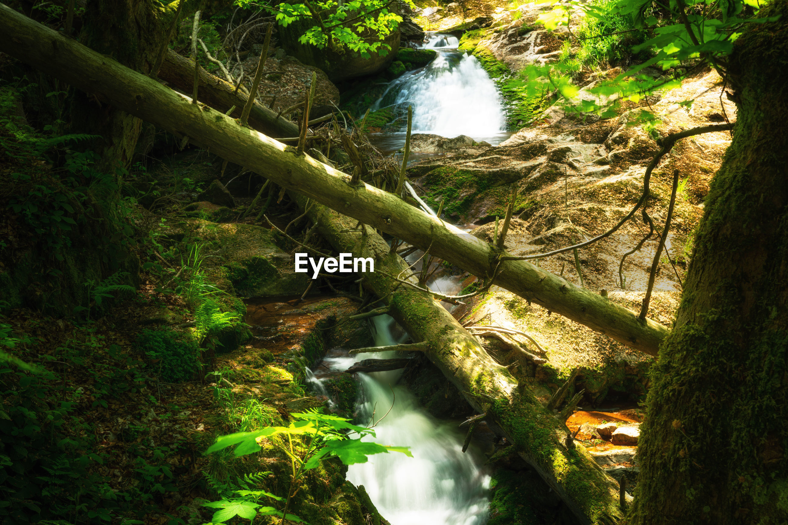 waterfall, plant, nature, water, tree, forest, rainforest, stream, beauty in nature, natural environment, land, green, jungle, woodland, scenics - nature, no people, flowing water, leaf, motion, tranquility, environment, growth, water feature, river, long exposure, old-growth forest, day, body of water, outdoors, tranquil scene, non-urban scene, flowing, wilderness, sunlight, watercourse, moss, creek, vegetation, autumn, rock, landscape, high angle view, idyllic
