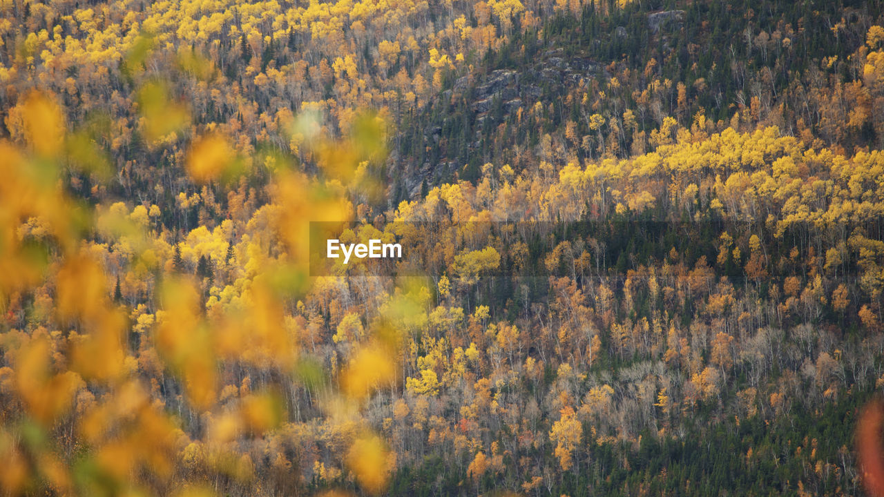Scenic view of yellow flowering trees in forest during autumn