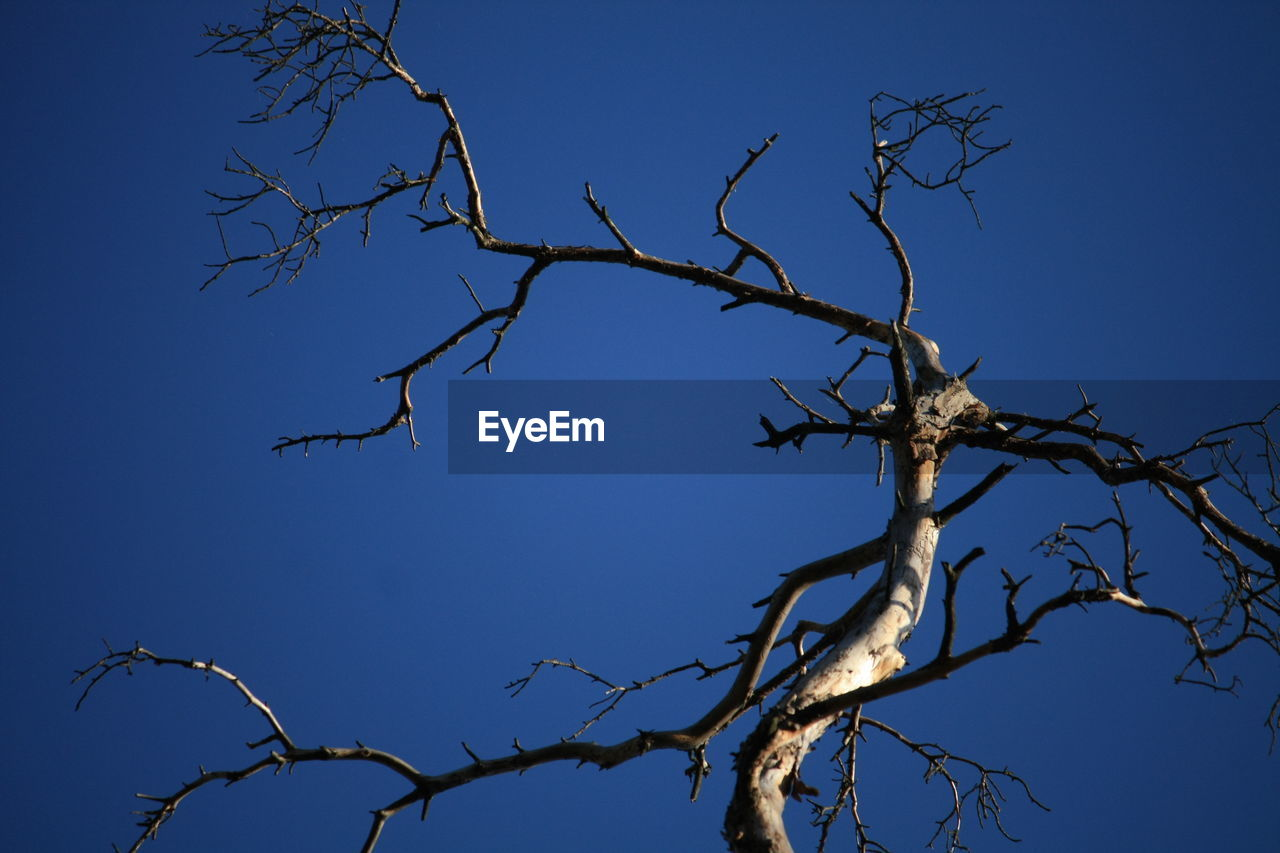 sky, blue, tree, low angle view, bare tree, branch, clear sky, plant, nature, no people, tranquility, day, beauty in nature, outdoors, dead plant, scenics - nature, sunlight, silhouette, bare, dried plant