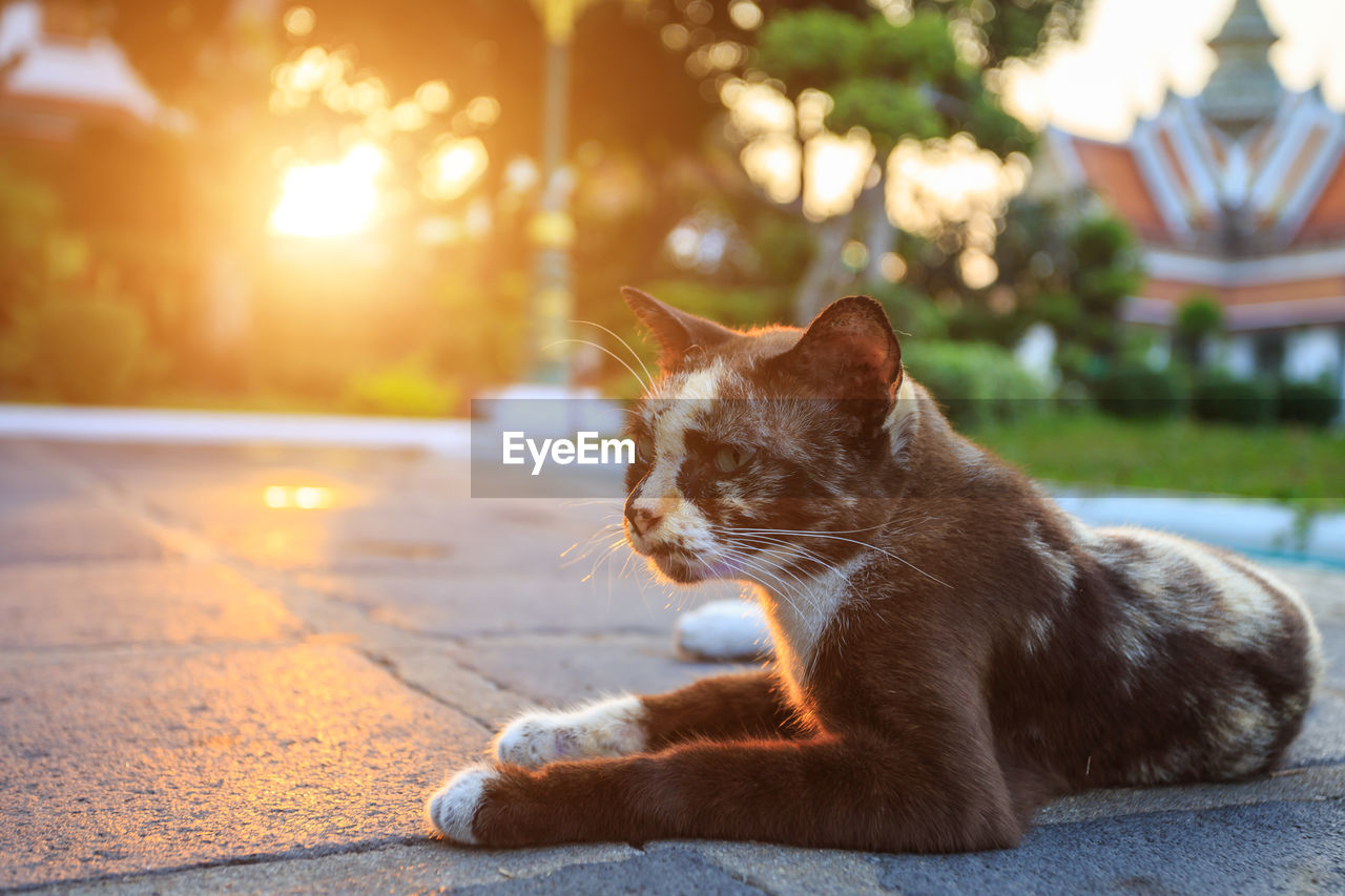 cat, mammal, pets, domestic, domestic cat, domestic animals, feline, animal themes, one animal, animal, vertebrate, relaxation, focus on foreground, sunlight, no people, sitting, whisker, looking, close-up, looking away, ginger cat