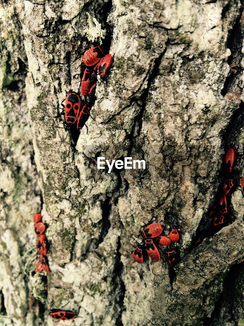 insect, invertebrate, animals in the wild, animal wildlife, red, tree, nature, animal themes, day, plant, animal, no people, close-up, trunk, tree trunk, beetle, outdoors, textured, focus on foreground, one animal, butterfly - insect